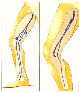 Figure 66: Long and accessory saphenous veins.