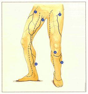 Figure 71. Troncs veineux d'origine abdominopelvienne.